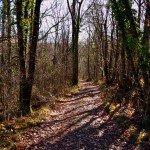 Vous aurez le plaisir de vous promener dans la forêt du domaine dans un environnement bucolique